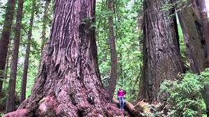 California Camping   Kamp Klamath In The Heart Of The