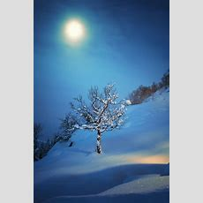 25+ Best Ideas About Winter Night On Pinterest  Winter Snow, Winter Scenes And Winter Light