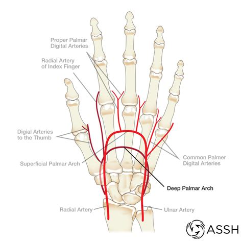 Anatomy Archives The Handcare Blog