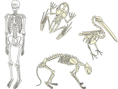 Dzīvnieku uzbūve un attīstība — teorija. Dabaszinības, 5 ...