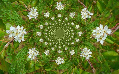 strauch mit weißen blüten die 75 besten wei 223 e hintergrundbilder