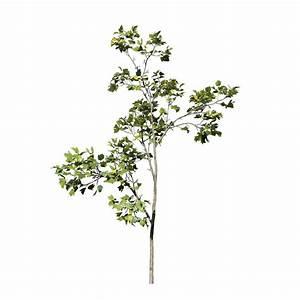 Red Maple Seedling - SpeedTree