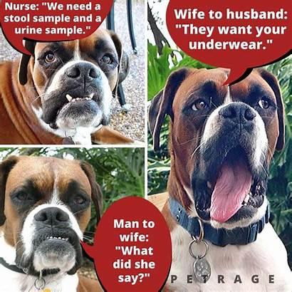 Meme Dog Sarcastic Boxer Doctor Petrage Memes