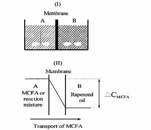 The Principle Of The Membrane Reactor Configuration   I
