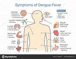 Symptoms Dengue Fever Patient Illustration Diagram Health ...
