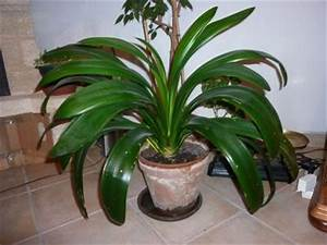Identifier Identification De Plante D39intrieur