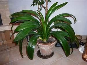 Plante Suspendue Intérieur : identifier identification de plante d 39 int rieur ~ Teatrodelosmanantiales.com Idées de Décoration