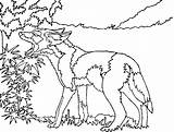 Coyote Coloring Pages Coyotes Howling Printable Drawing Head Runner Road Comments Wiley Phoenix Getdrawings Photobucket Template 630px 71kb sketch template