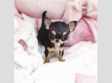 Paris Hilton Gets New Tiny Dog and Shares Photo on