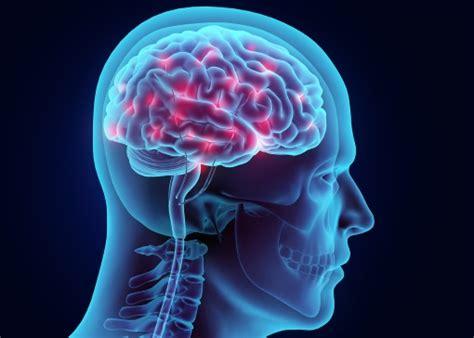 siege mentality definition cerveau tout savoir sur le cerveau doctissimo