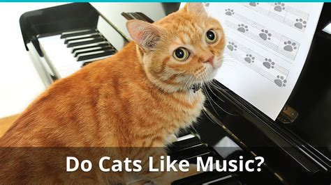 Does cats like music