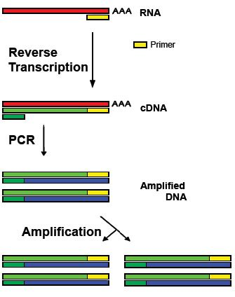Post Translational Modification Adalah by Polymerase Chain Reaction Pcr Biochemistry