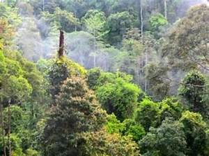View of the rooms - Picture of Borneo Rainforest Lodge ...