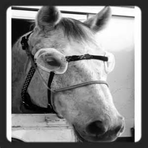 Equine Eye Protection Goggles