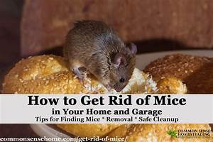 The best ways get rid of mice in your house and garage for Mice in between floors