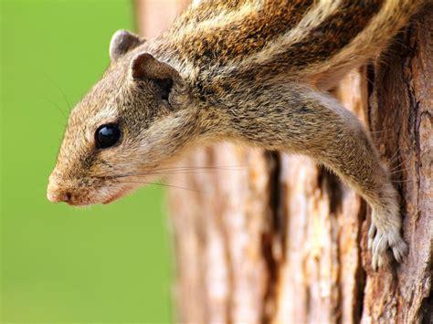 7 Animal Pests Hgtv