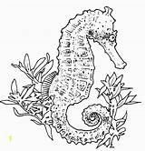 Coloring Seahorse Pages Adults Realistic Seahorses Adult Divyajanani sketch template