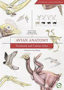 Avian Anatomy  Textbook And Colour Atlas