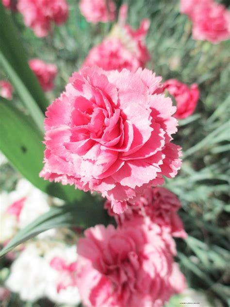 flowers  literary spring designs