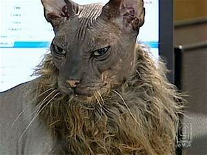 The Ugliest Cat In The World ~ Damn Cool Pictures