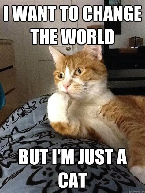 Depressed Cat Meme - depressed cat memes hd