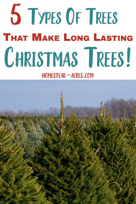 what type of christmas tree lasts the longest how to make your tree last longer homestead acres