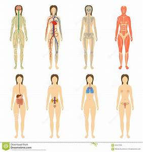 Set Of Human Organs And Systems Of The Body Stock Vector ...