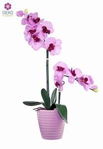 Künstliche Orchideen Im Topf : k nstliche orchidee in rosa lavendel mit farblich passendem topf 56cm ~ Watch28wear.com Haus und Dekorationen