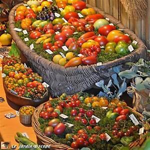 Quand Planter Les Tomates Cerises : comment r ussir la culture de vos tomates le ~ Farleysfitness.com Idées de Décoration