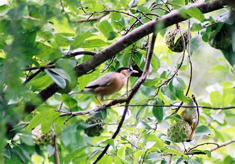 wild animals birds