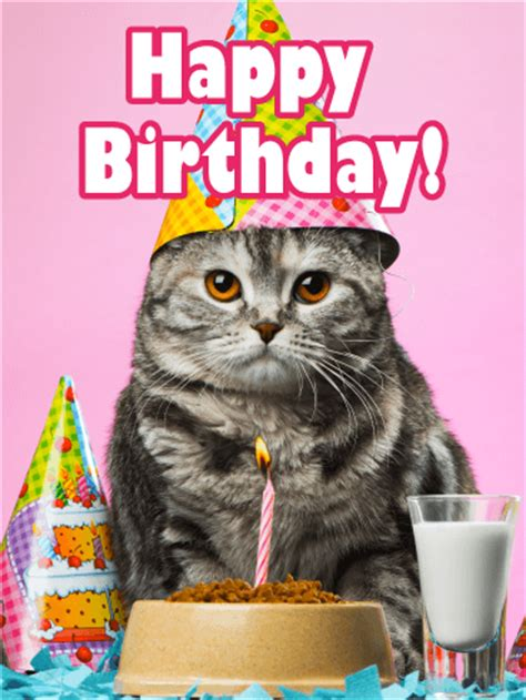 birthday party cat card birthday greeting cards  davia