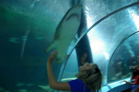 sea aquarium underwater world underwater world sea mooloolaba