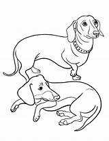 Dachshund Coloring Pages Dog Printable Colouring Sausage Adult Sheets Haired Coloringcafe Puppy Drawing Pdf Weiner Dogs Sheet Dachshunds Christmas Wiener sketch template