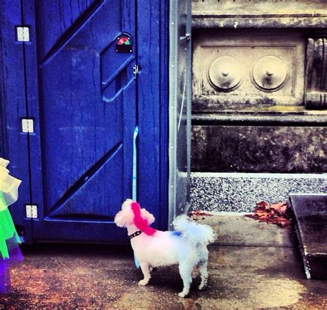 Instajournal The  People You Meet During Mardi Gras As Told By  Ee  Dogs Ee   Via Nola Vie