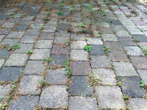 Unkraut Fugen Entfernen by Unkraut In Den Fugen Bauzentrum Beckmann Startseite