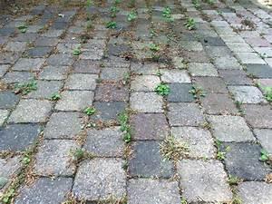 Unkraut Auf Gehwegen Dauerhaft Entfernen : unkraut zwischen steinplatten wie entfernt man es ~ Michelbontemps.com Haus und Dekorationen