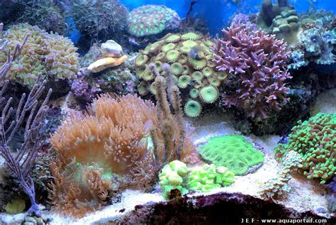 materiel aquarium eau de mer coraux pour aquarium eau de mer 28 images corail coraux mort de d 201 coration pour aquarium