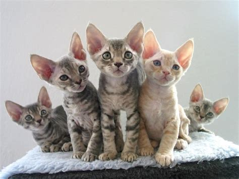Cat Pictures Gallery