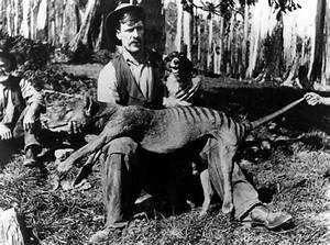 'I've seen two Tasmanian tigers in the Barrington Tops ...