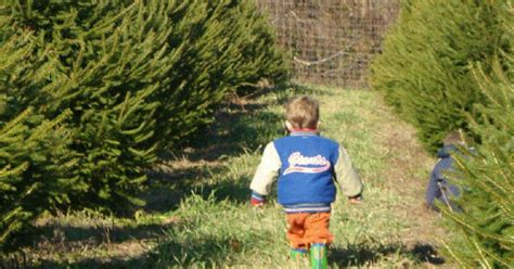 cut your own or choose a pre cut christmas tree hidden