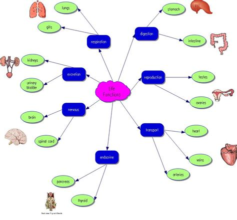fishel abc life functions concept map