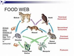 Relationships within Ecosystems - ppt video online download