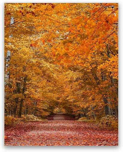 County Door Fall Foliage Metal Fine Landscape