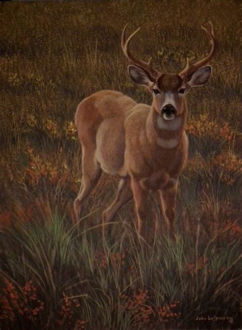 show   nature blog sitka blacktail   oracle