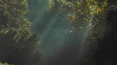 Dark Nature Tree Desktop Trees Wallpapers Macbook