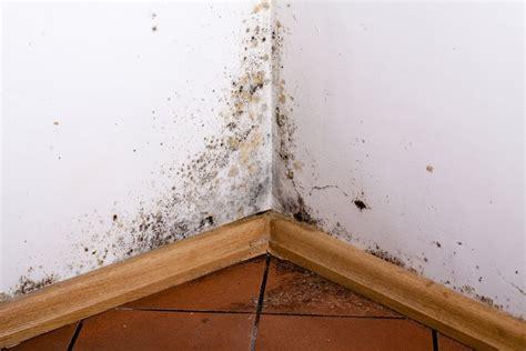 nettoyer moisissure mur salle de bain enlever la moisissure