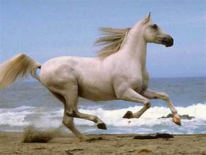 三白雄马: White Horses