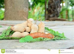 Fresh And Cracked Tamarind Stock Photo - Image: 38878763