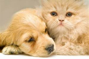 Dogs And Cats Can Live In Perfect Harmony In The Home, If ...
