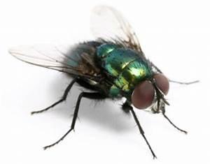 Fliegen In Der Erde : ma nahmen gegen fliegen im haus ~ Lizthompson.info Haus und Dekorationen